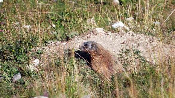 "Hike of the ""Marmots"""